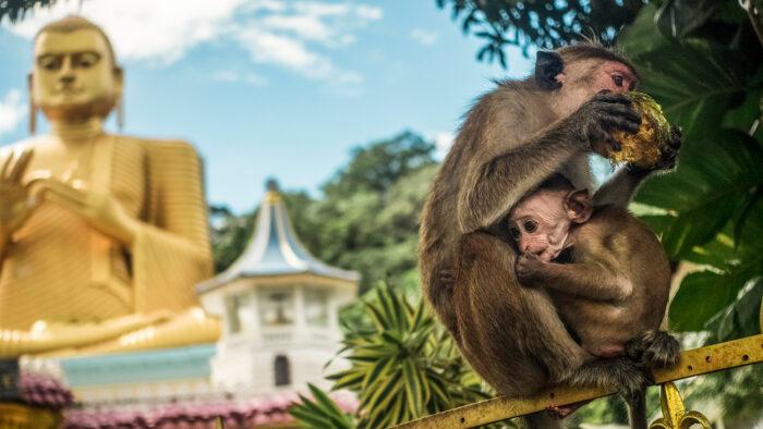fauna de Dambulla como fotografía de viajes