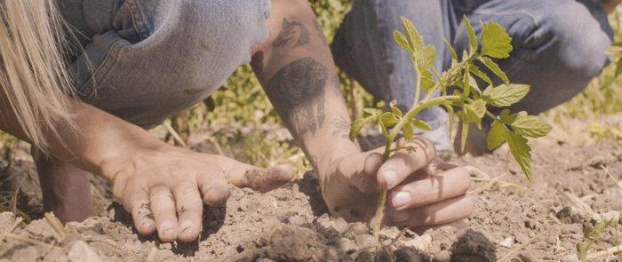 Trabajo para el Semillero como publicidad agricultura sostenible